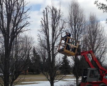 tree-and-shrub-pruning-1