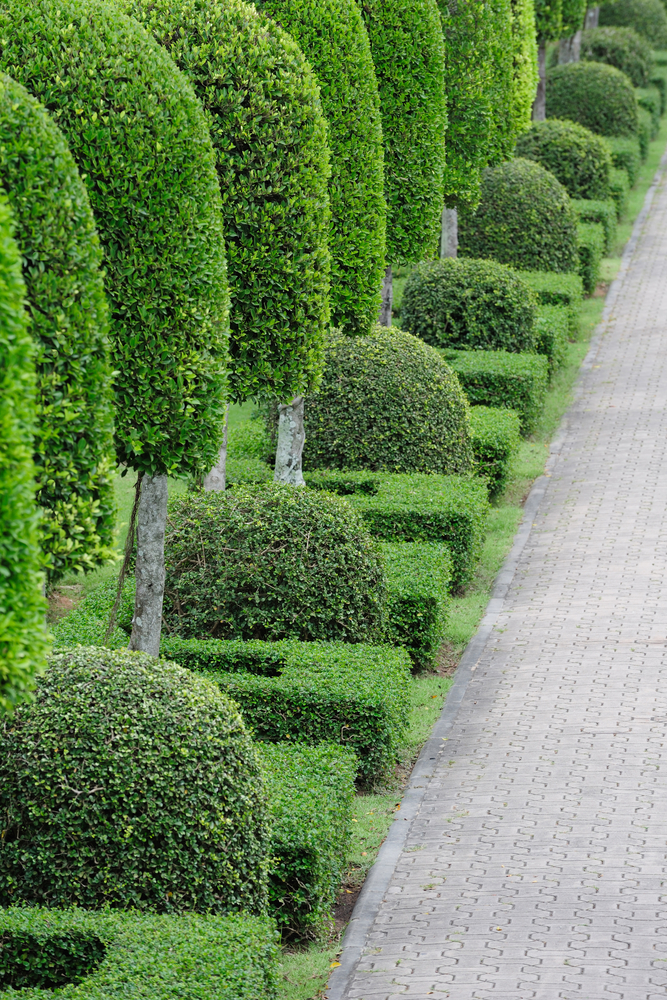 Ornamental Landscaping Bushes : Autumn oaks landscaping ? tree shrub pruning